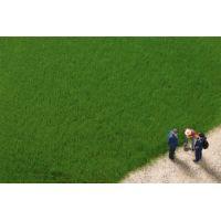 Auhagen 75615 Fű szóróanyag, sztatikus, 4,5 mm, sötétzöld, 50 g