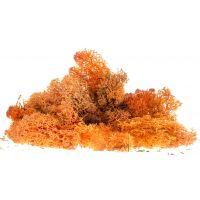 Izlandi moszat, őszi színezés, 80 g