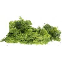 Izlandi moszat, sötétzöld, 80 g