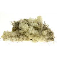 Izlandi moszat, szürke, 80 g