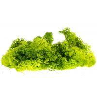 Izlandi moszat, világoszöld, 80 g