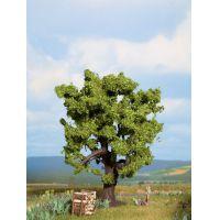 Noch 21760 Tölgyfa, 15 cm