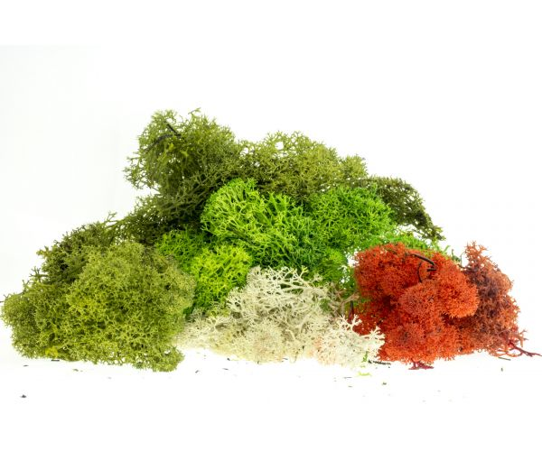 Izlandi moszat, vegyes színezésű, 80 g